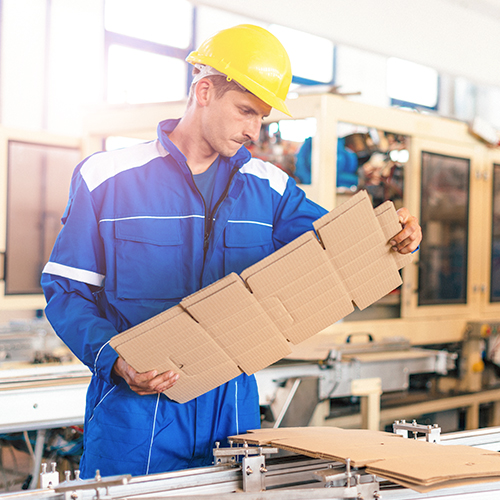 Man in folded carton package manufacturing facility examining sustainable cardboard packaging design
