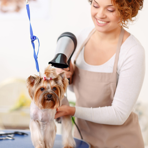Woman grooming a pet in a national pet supply retail store