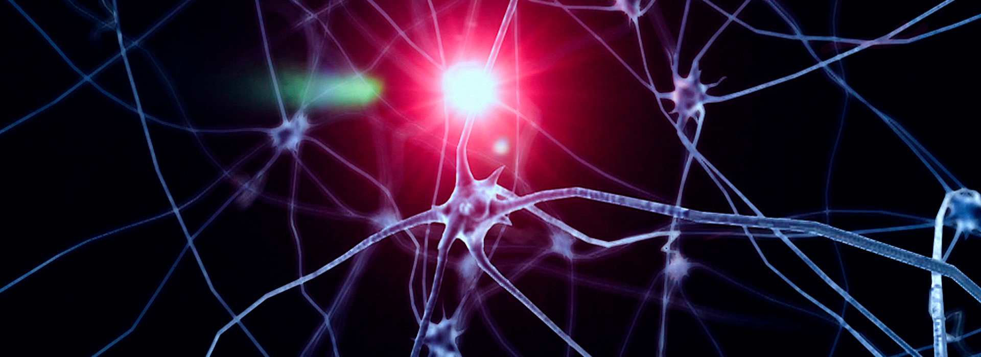 Neurons showing activity in the brain